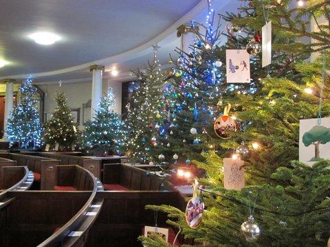 Christmas Trees Shrewsbury
